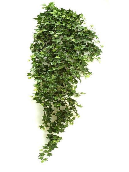 Pflanzen Hängend seidenpflanze hedera, hängende pflanze, grün, 125mm, exklusiver